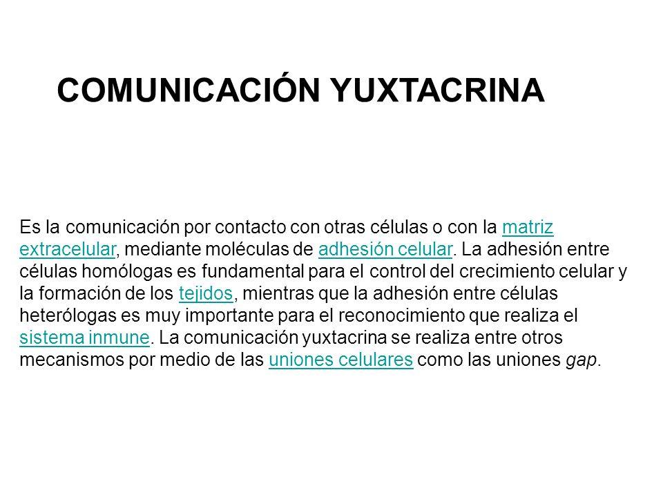 COMUNICACIÓN YUXTACRINA