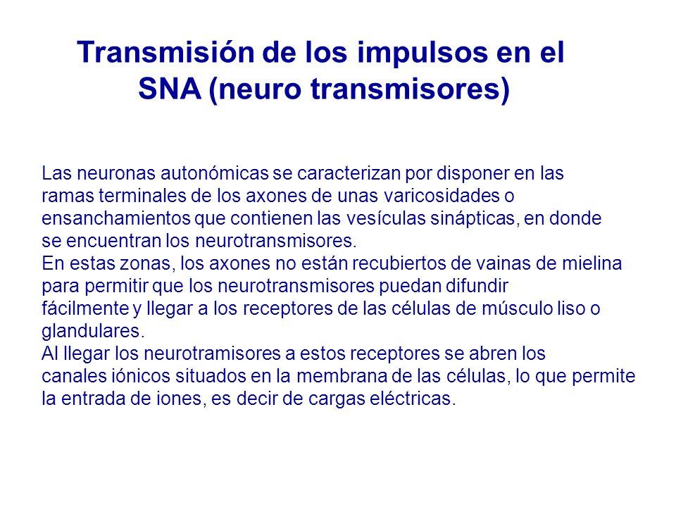 Transmisión de los impulsos en el SNA (neuro transmisores)