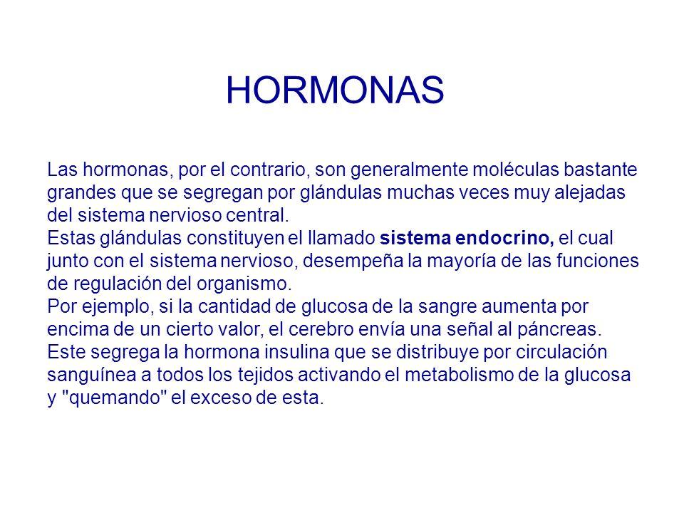 HORMONAS Las hormonas, por el contrario, son generalmente moléculas bastante. grandes que se segregan por glándulas muchas veces muy alejadas.
