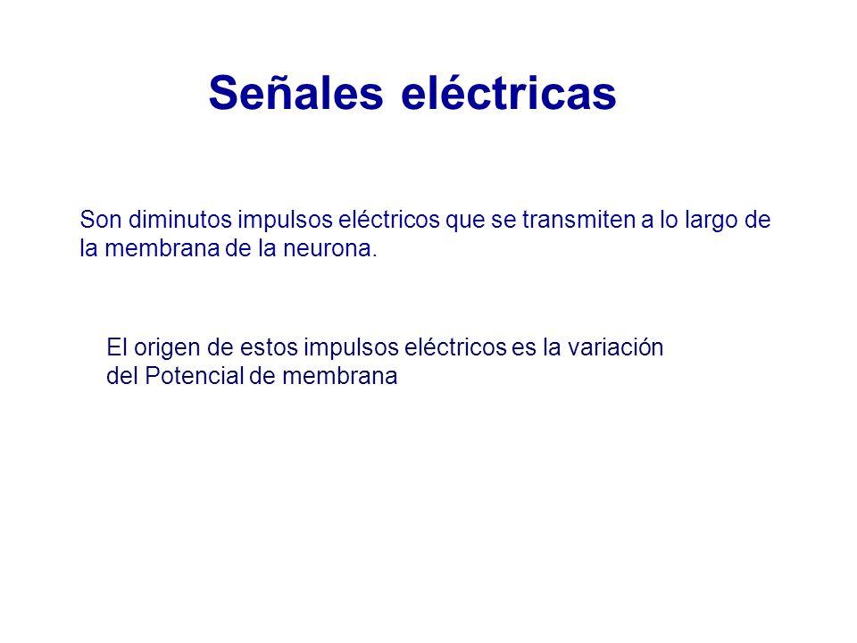 Señales eléctricas Son diminutos impulsos eléctricos que se transmiten a lo largo de. la membrana de la neurona.