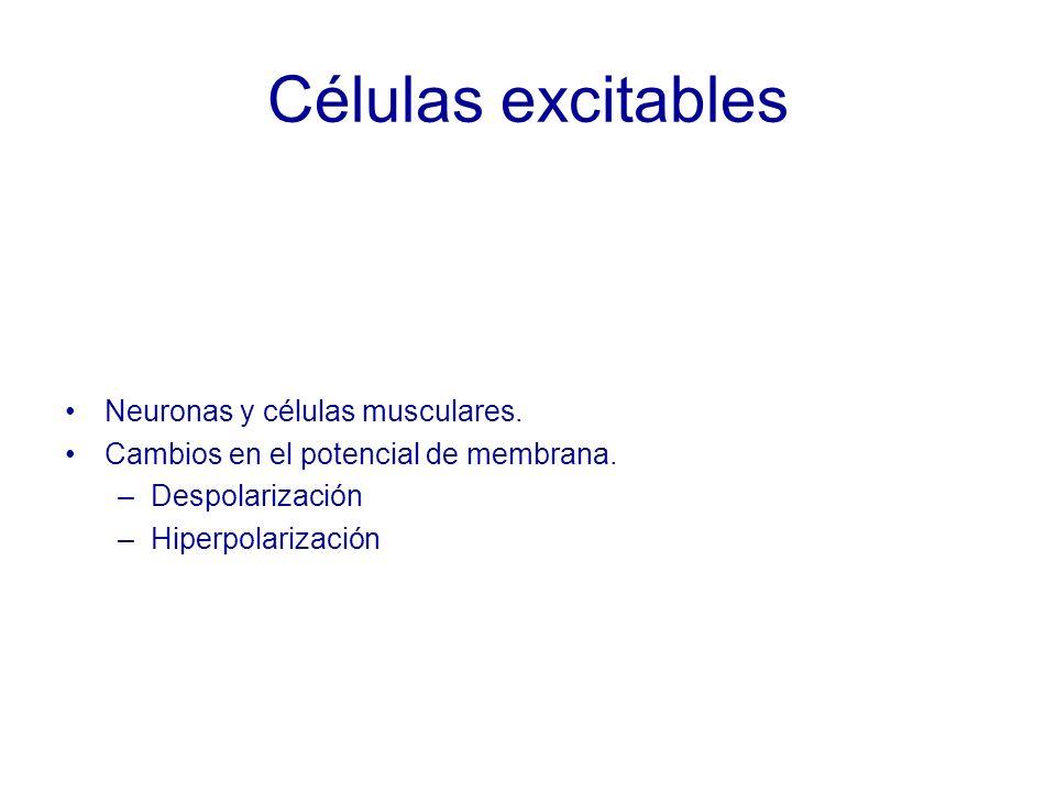Células excitables Neuronas y células musculares.