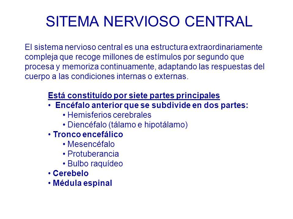 SITEMA NERVIOSO CENTRAL