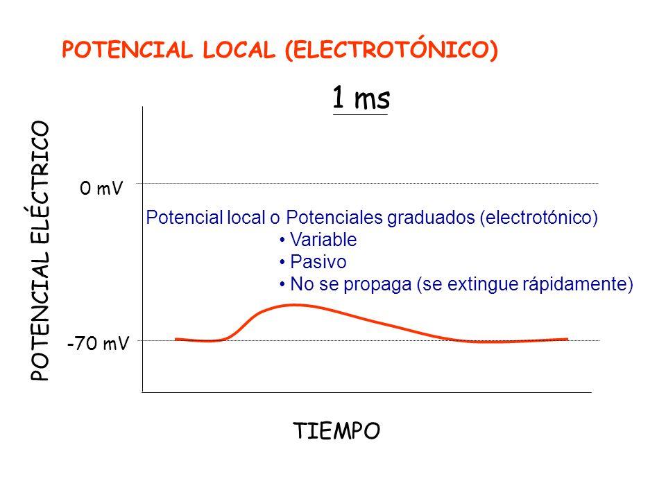 1 ms POTENCIAL LOCAL (ELECTROTÓNICO) POTENCIAL ELÉCTRICO TIEMPO 0 mV