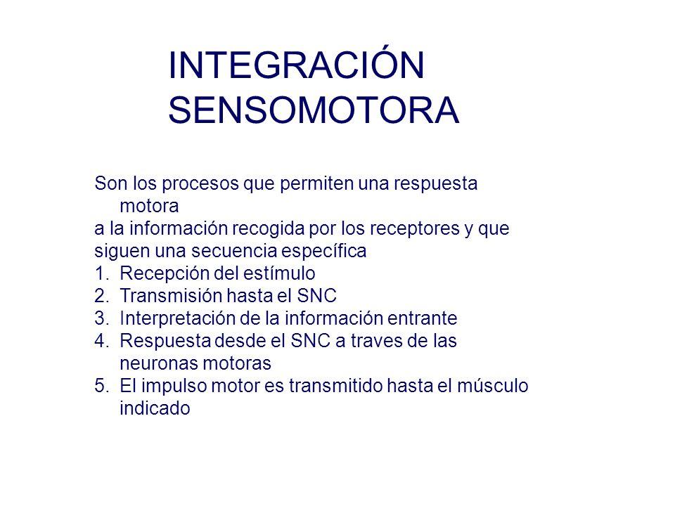 INTEGRACIÓN SENSOMOTORA