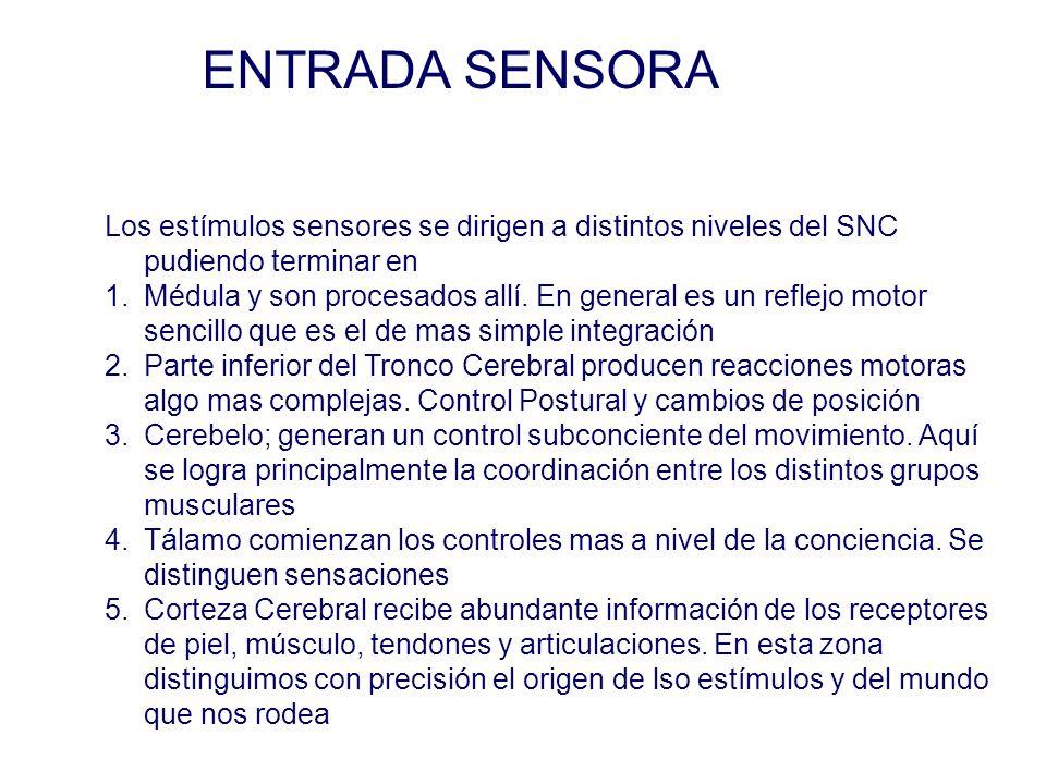 ENTRADA SENSORA Los estímulos sensores se dirigen a distintos niveles del SNC pudiendo terminar en.