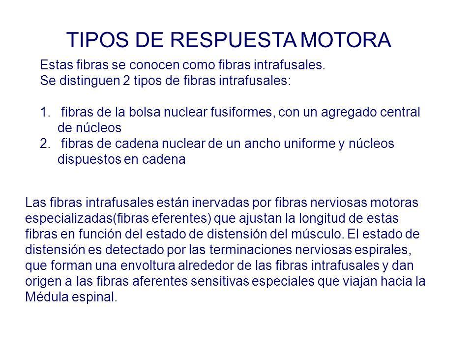 TIPOS DE RESPUESTA MOTORA