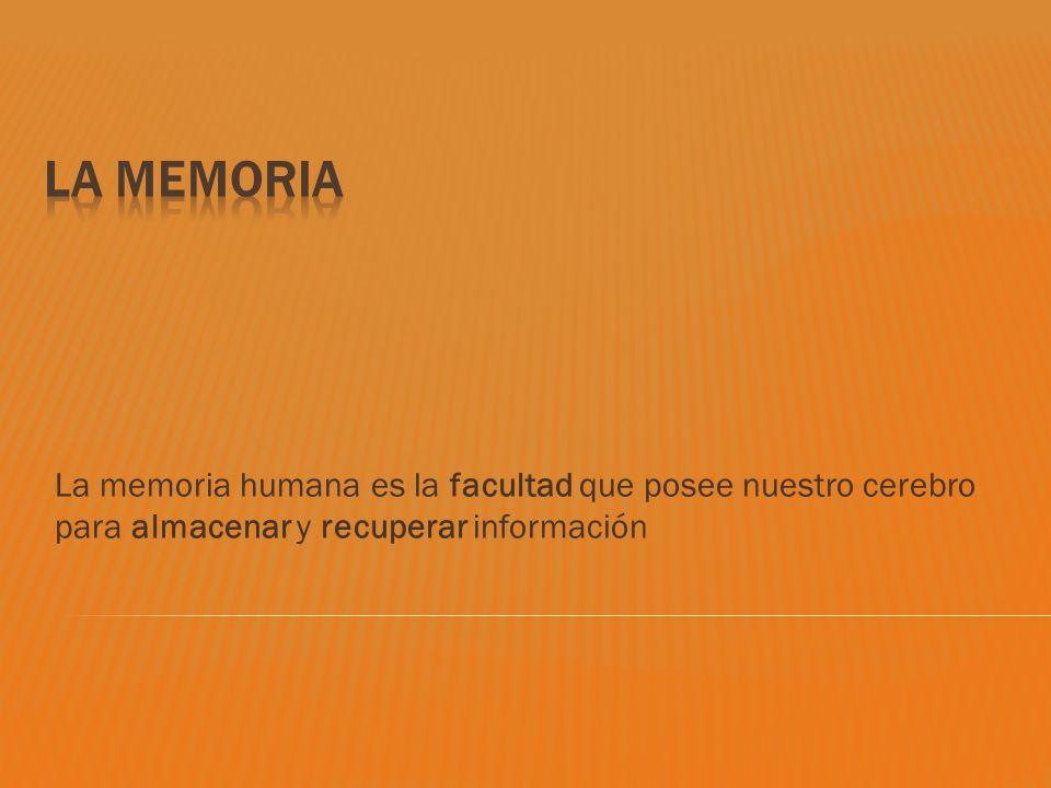 La Memoria La memoria humana es la facultad que posee nuestro cerebro para almacenar y recuperar información.