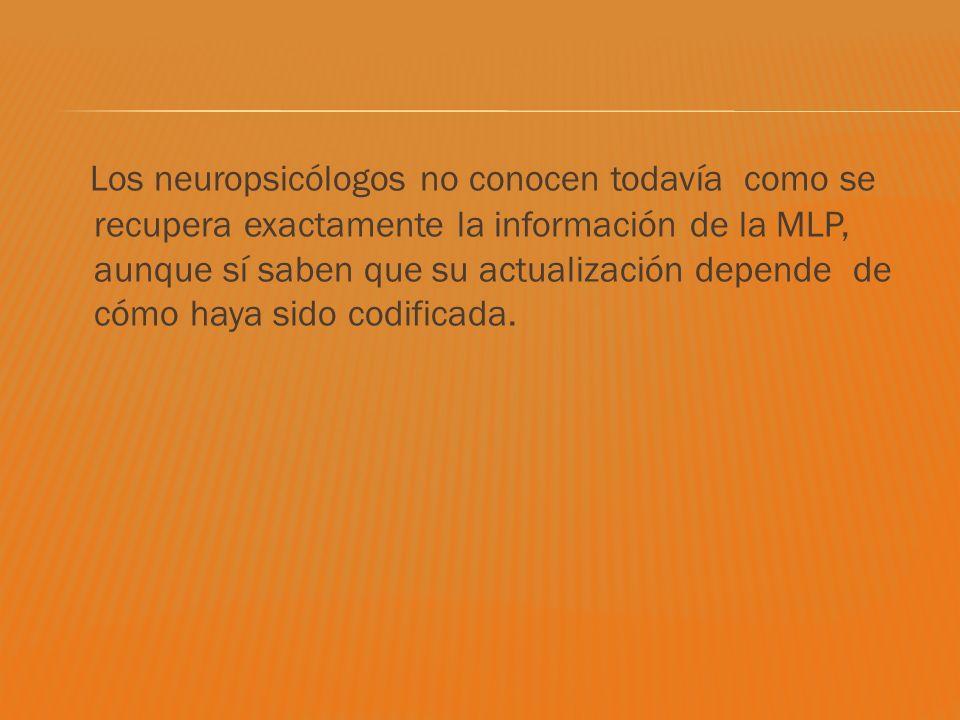 Los neuropsicólogos no conocen todavía como se recupera exactamente la información de la MLP, aunque sí saben que su actualización depende de cómo haya sido codificada.