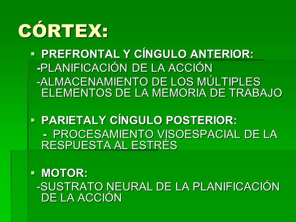 CÓRTEX: PREFRONTAL Y CÍNGULO ANTERIOR: -PLANIFICACIÓN DE LA ACCIÓN