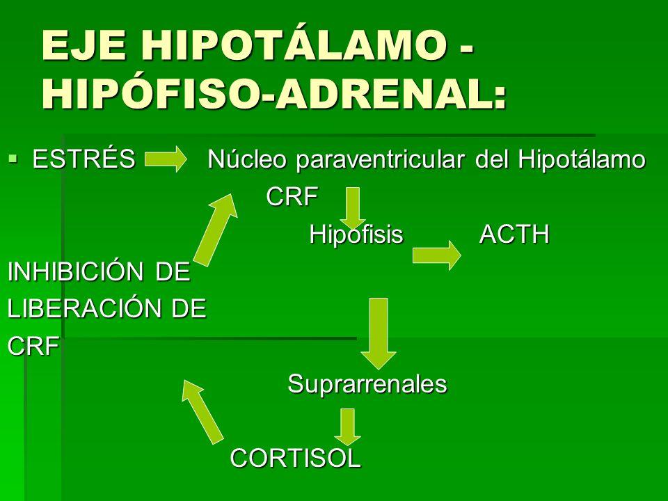 EJE HIPOTÁLAMO -HIPÓFISO-ADRENAL: