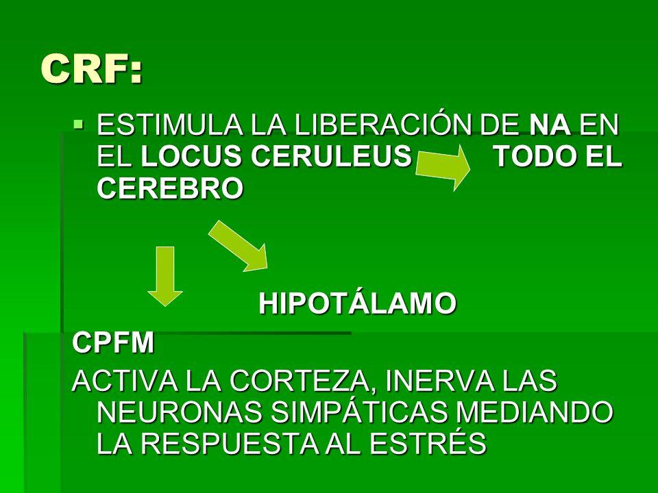 CRF: ESTIMULA LA LIBERACIÓN DE NA EN EL LOCUS CERULEUS TODO EL CEREBRO