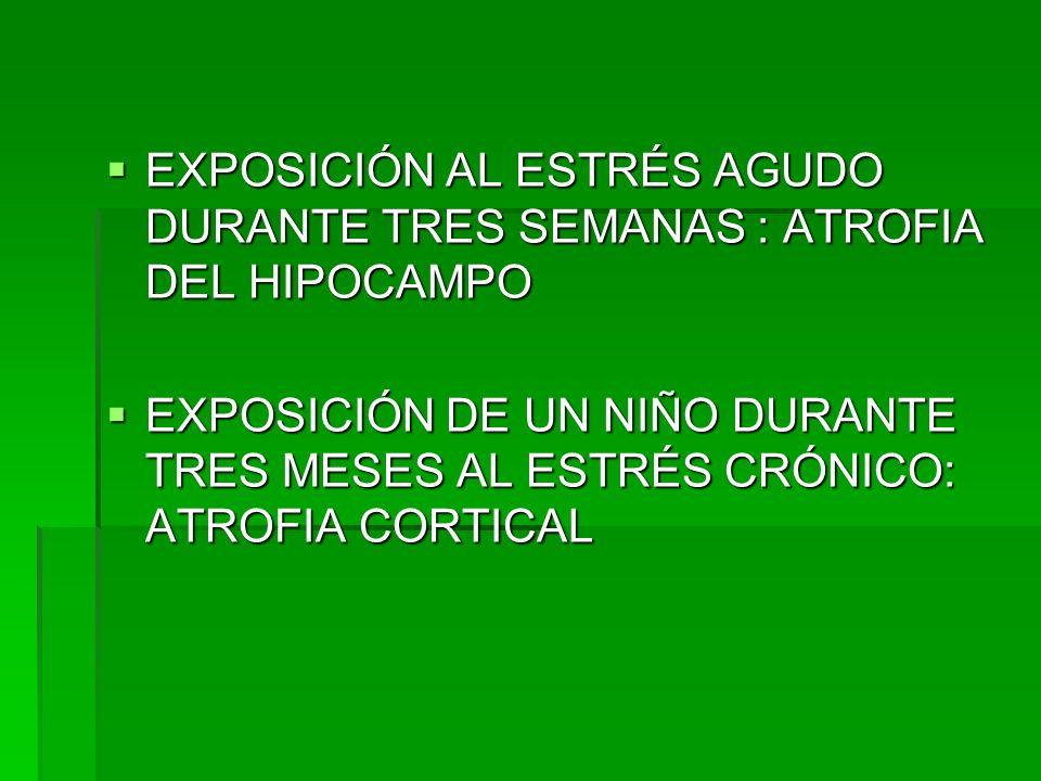 EXPOSICIÓN AL ESTRÉS AGUDO DURANTE TRES SEMANAS : ATROFIA DEL HIPOCAMPO