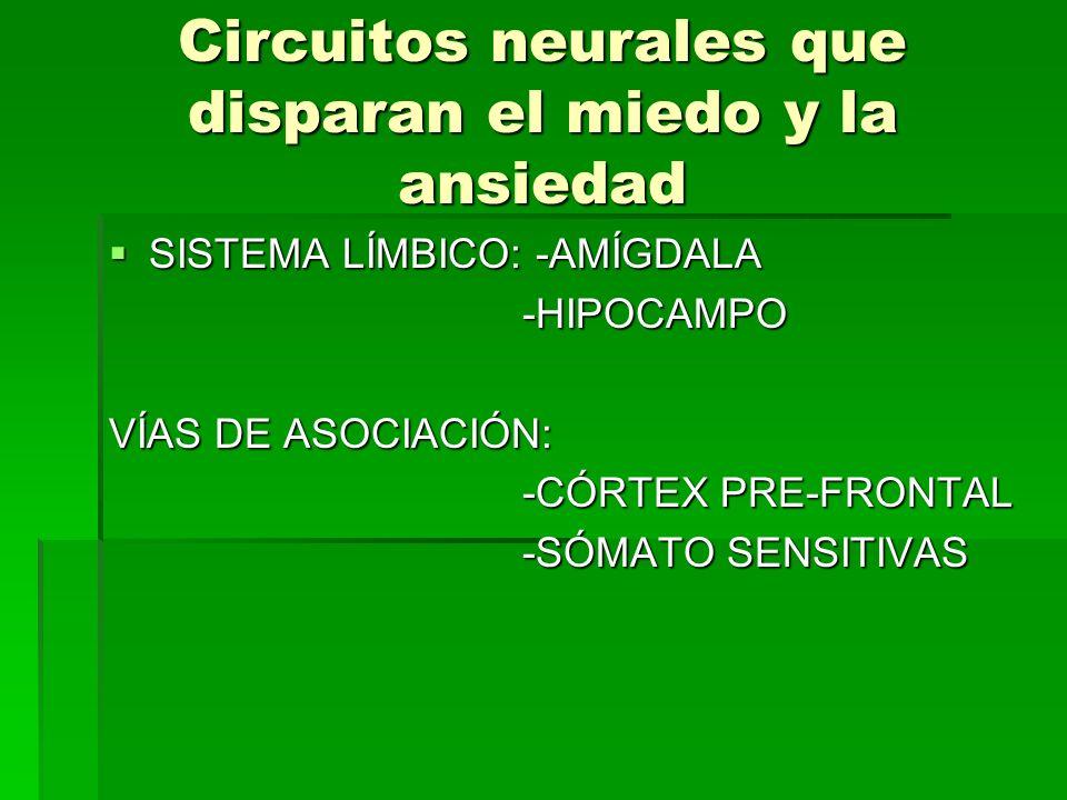 Circuitos neurales que disparan el miedo y la ansiedad