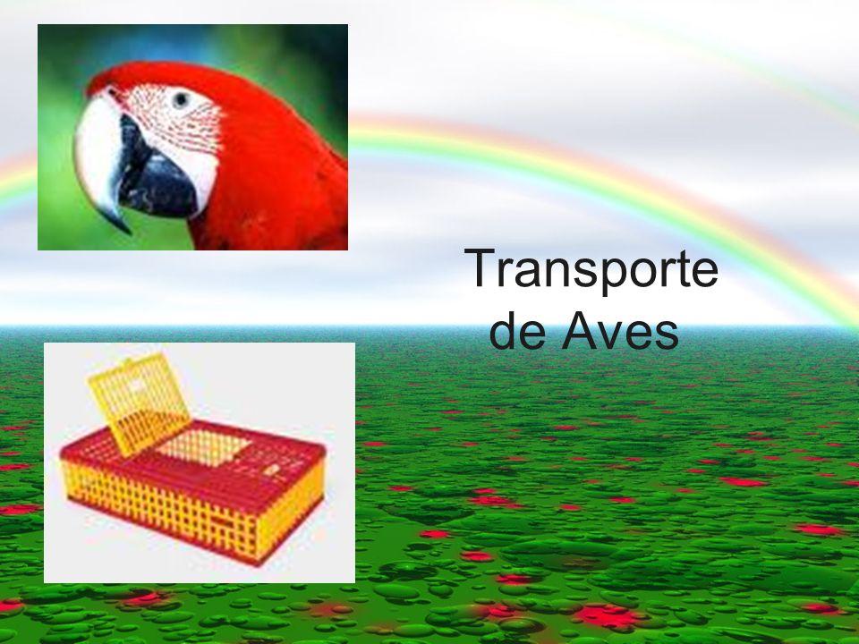 Transporte de Aves