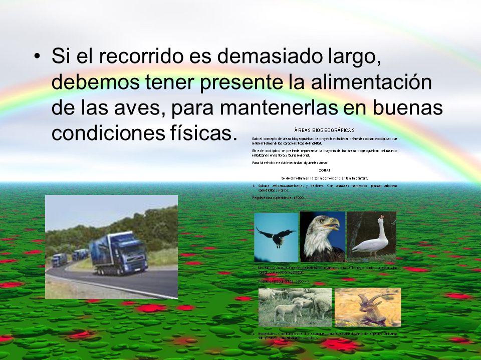 Si el recorrido es demasiado largo, debemos tener presente la alimentación de las aves, para mantenerlas en buenas condiciones físicas.