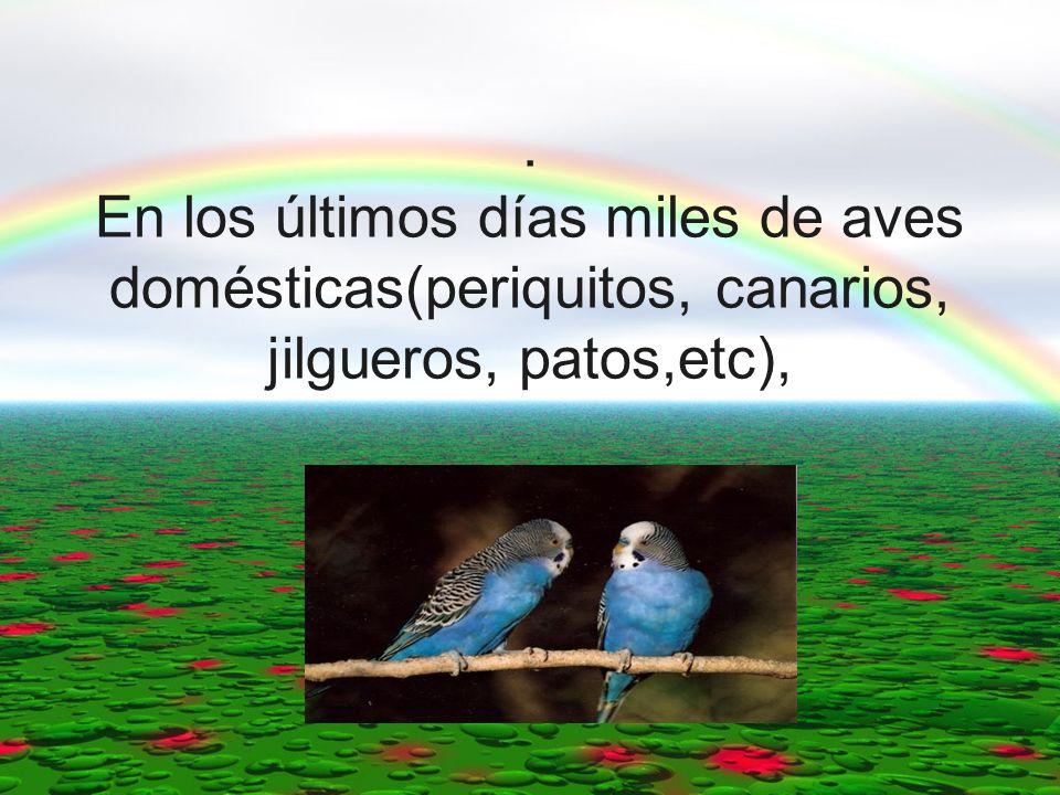 . En los últimos días miles de aves domésticas(periquitos, canarios, jilgueros, patos,etc),