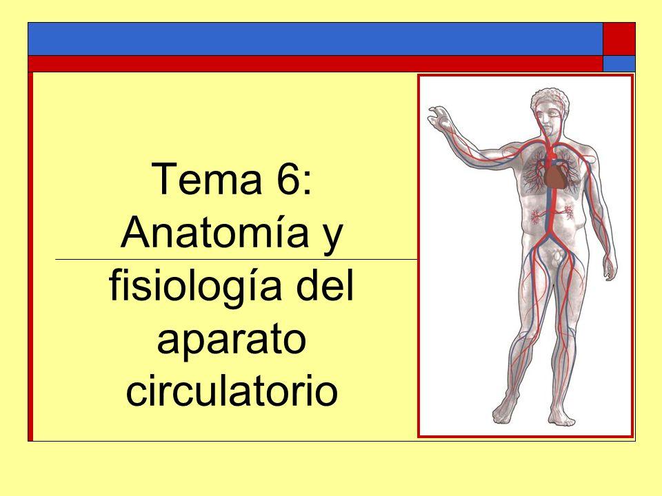 Tema 6: Anatomía y fisiología del aparato circulatorio - ppt video ...