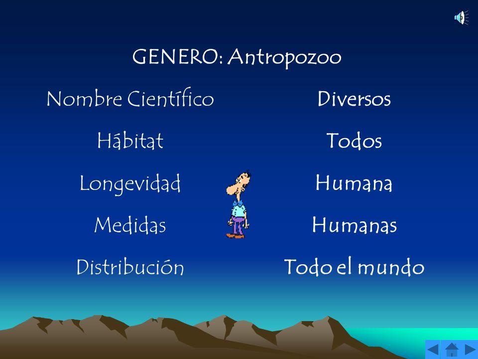 GENERO: Antropozoo Nombre Científico. Diversos. Hábitat. Todos. Longevidad. Humana. Medidas. Humanas.