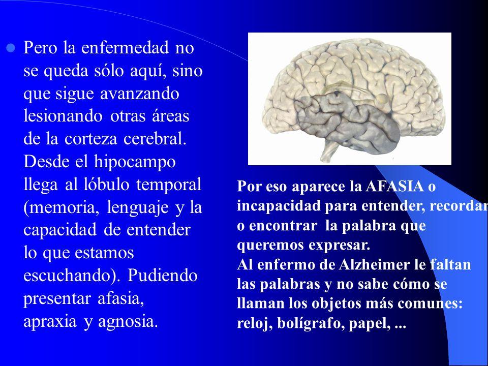 Pero la enfermedad no se queda sólo aquí, sino que sigue avanzando lesionando otras áreas de la corteza cerebral. Desde el hipocampo llega al lóbulo temporal (memoria, lenguaje y la capacidad de entender lo que estamos escuchando). Pudiendo presentar afasia, apraxia y agnosia.