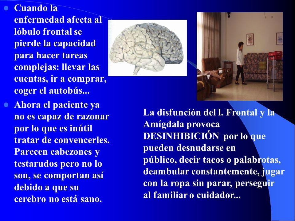 Cuando la enfermedad afecta al lóbulo frontal se pierde la capacidad para hacer tareas complejas: llevar las cuentas, ir a comprar, coger el autobús...
