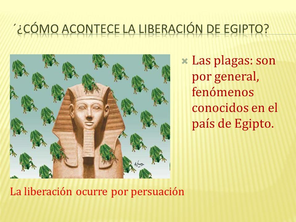 ´¿Cómo acontece la liberación de Egipto