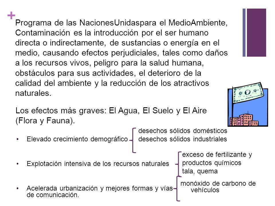 Los efectos más graves: El Agua, El Suelo y El Aire (Flora y Fauna).