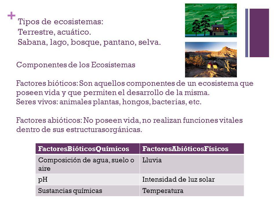Tipos de ecosistemas: Terrestre, acuático
