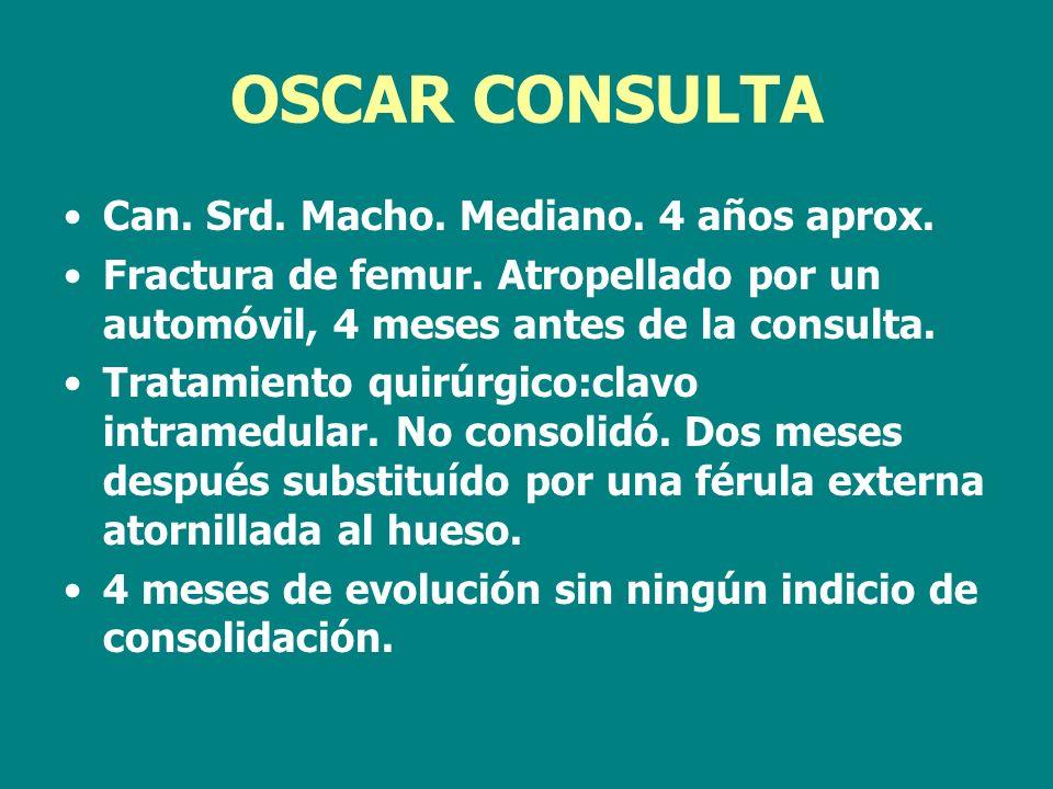 OSCAR CONSULTA Can. Srd. Macho. Mediano. 4 años aprox.