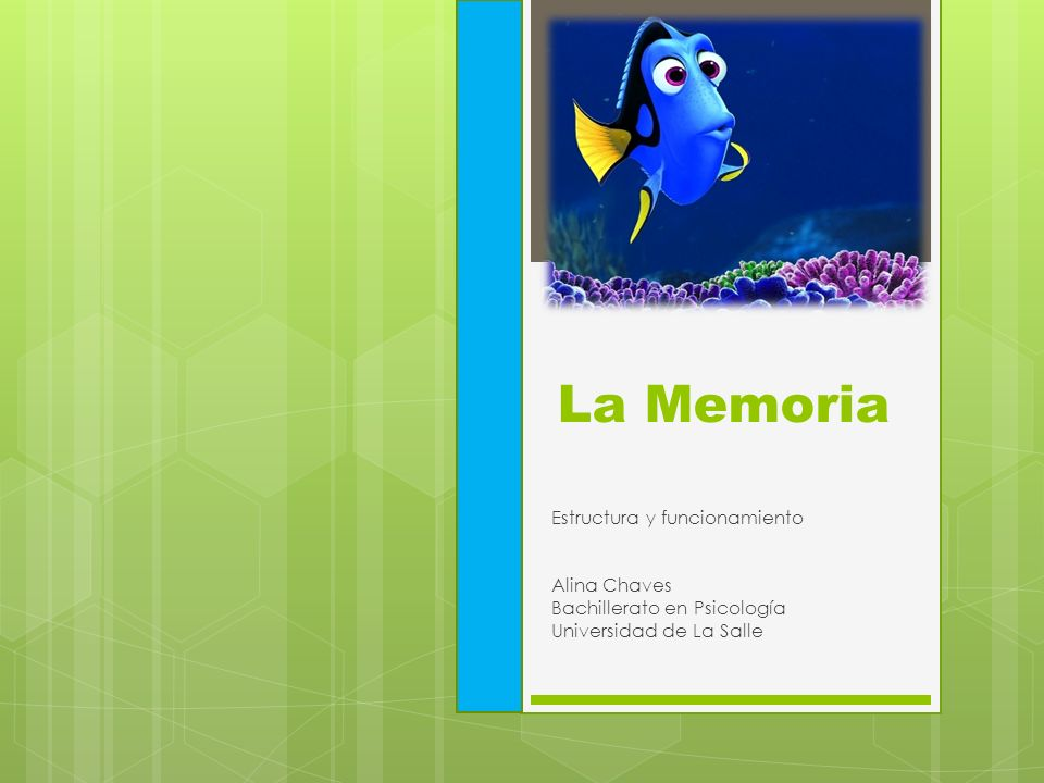La Memoria Estructura y funcionamiento Alina Chaves