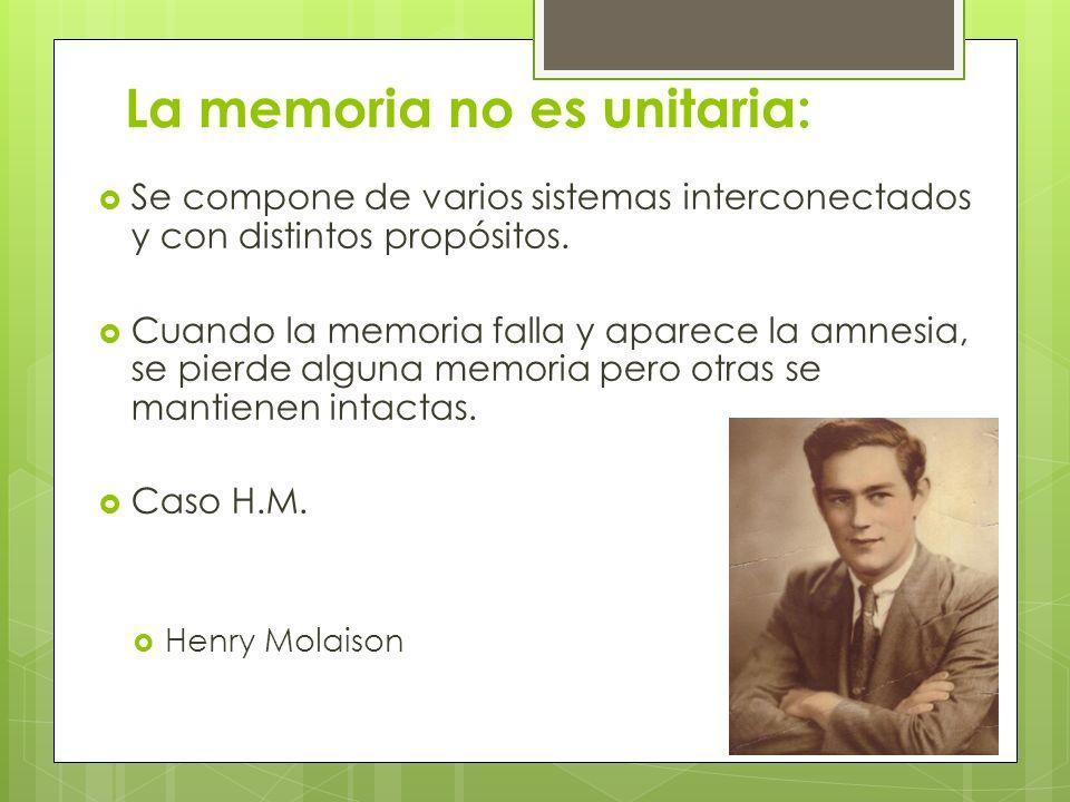 La memoria no es unitaria:
