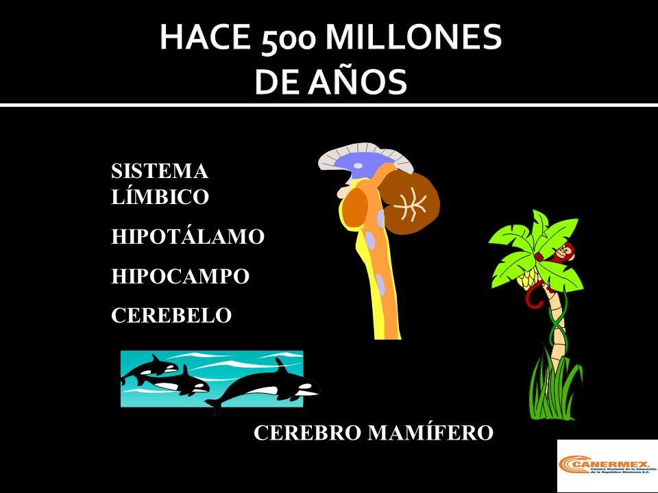 HACE 500 MILLONES DE AÑOS SISTEMA LÍMBICO HIPOTÁLAMO HIPOCAMPO
