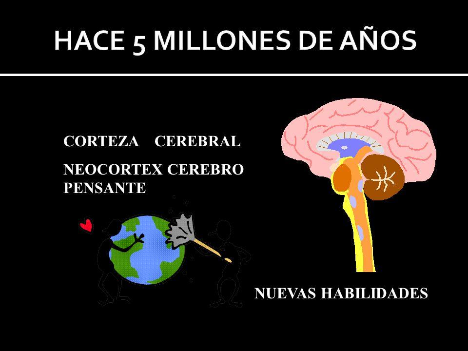 HACE 5 MILLONES DE AÑOS CORTEZA CEREBRAL NEOCORTEX CEREBRO PENSANTE