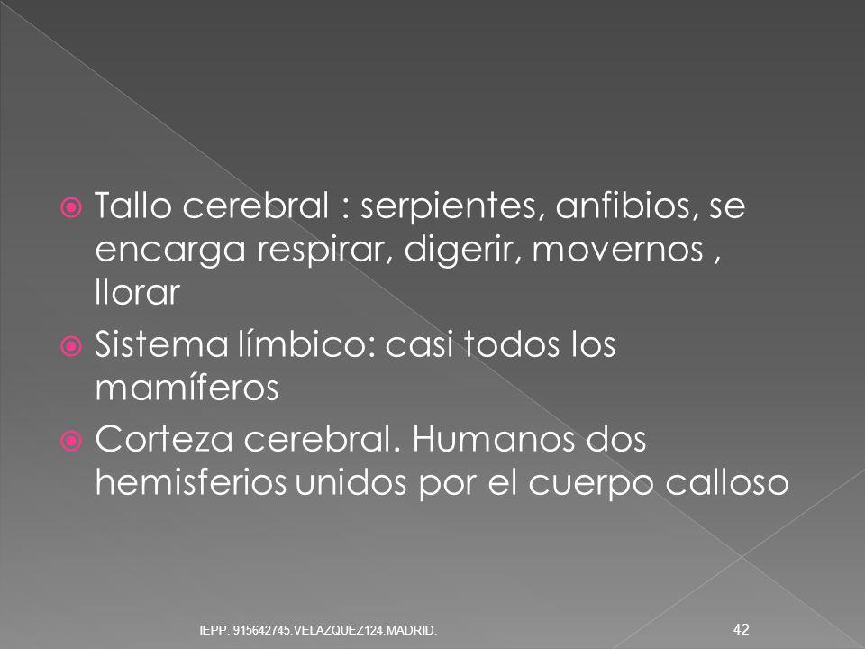 Sistema límbico: casi todos los mamíferos