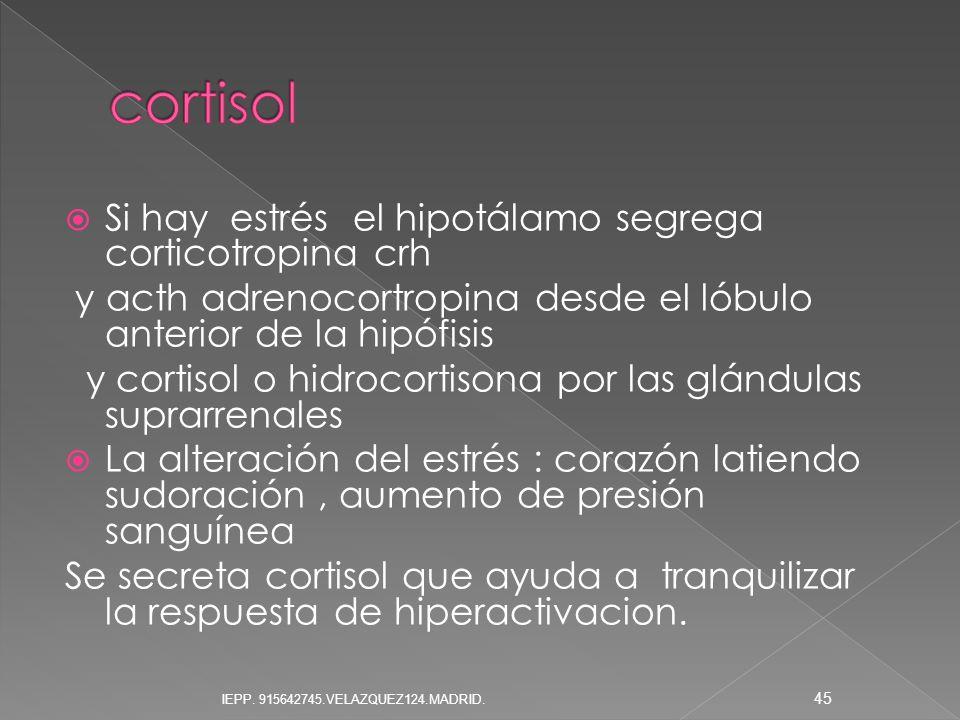 cortisol Si hay estrés el hipotálamo segrega corticotropina crh