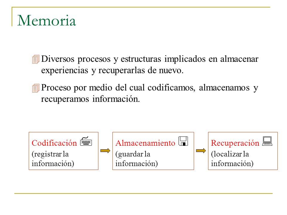 Memoria  Diversos procesos y estructuras implicados en almacenar experiencias y recuperarlas de nuevo.