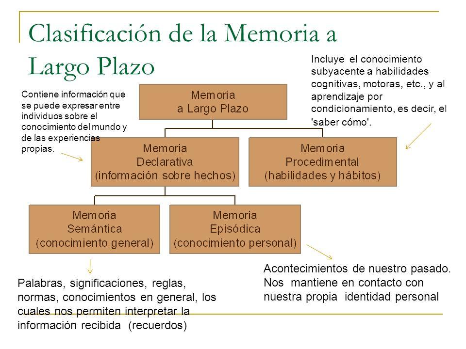 Clasificación de la Memoria a Largo Plazo
