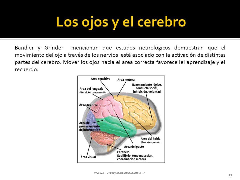 Los ojos y el cerebro