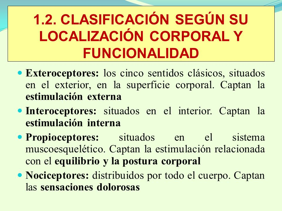1.2. CLASIFICACIÓN SEGÚN SU LOCALIZACIÓN CORPORAL Y FUNCIONALIDAD