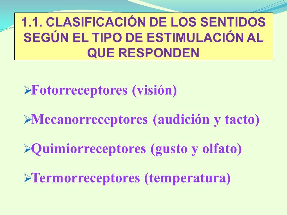 Fotorreceptores (visión) Mecanorreceptores (audición y tacto)