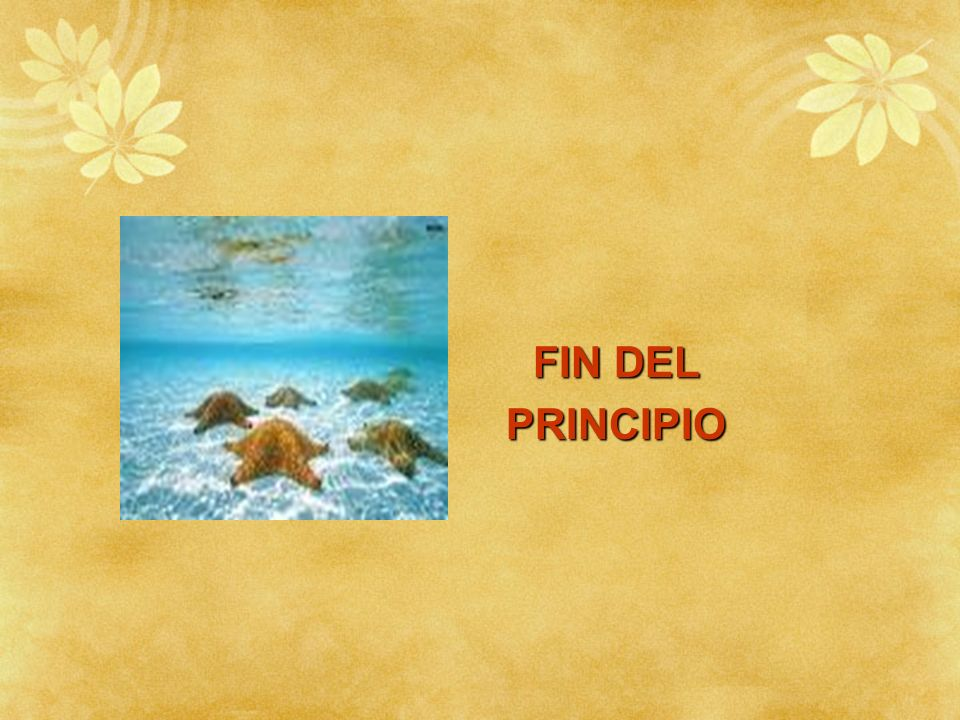 FIN DEL PRINCIPIO