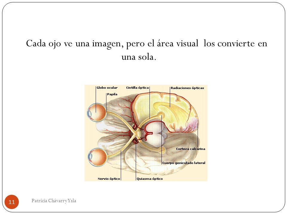 Cada ojo ve una imagen, pero el área visual los convierte en una sola.