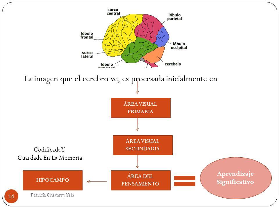 La imagen que el cerebro ve, es procesada inicialmente en