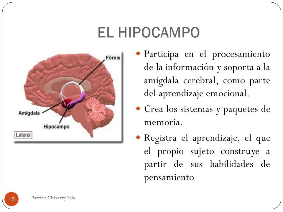 EL HIPOCAMPO Participa en el procesamiento de la información y soporta a la amígdala cerebral, como parte del aprendizaje emocional.