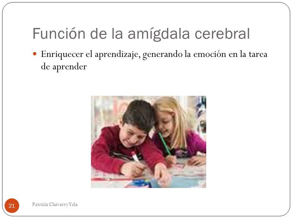 Función de la amígdala cerebral