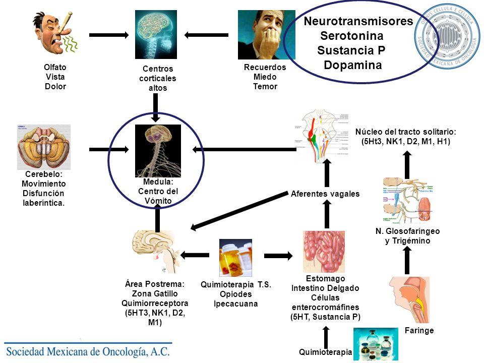 Neurotransmisores Serotonina Sustancia P Dopamina Olfato Vista Dolor