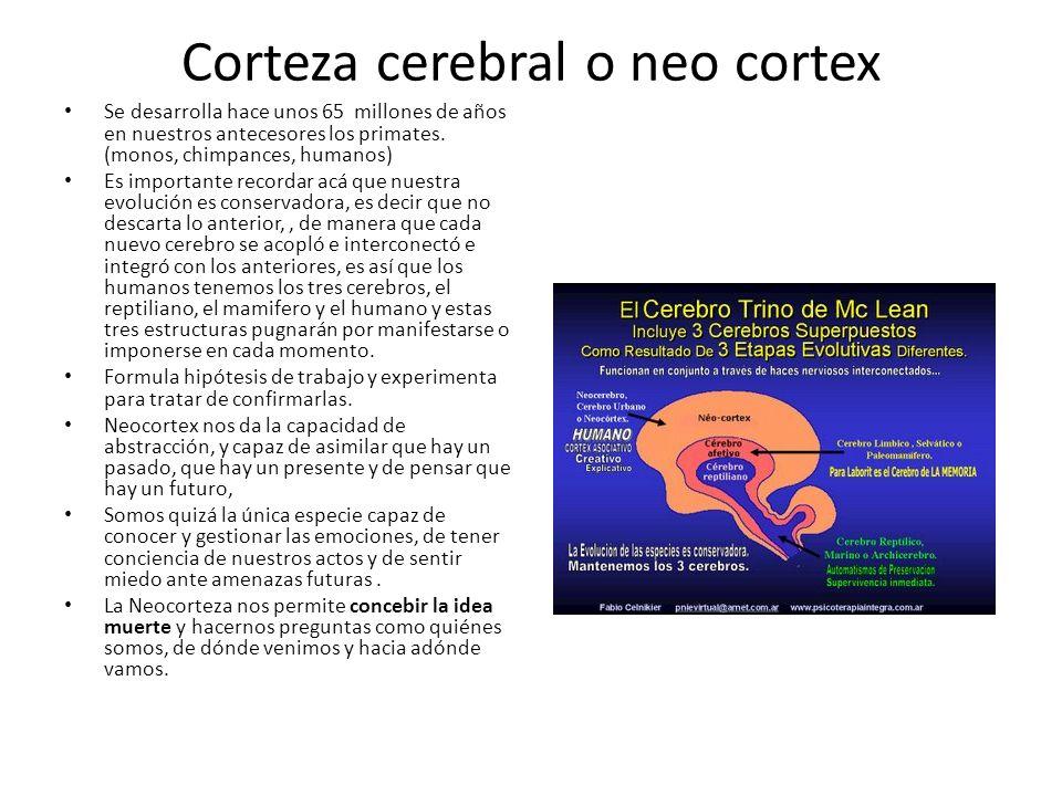 Corteza cerebral o neo cortex