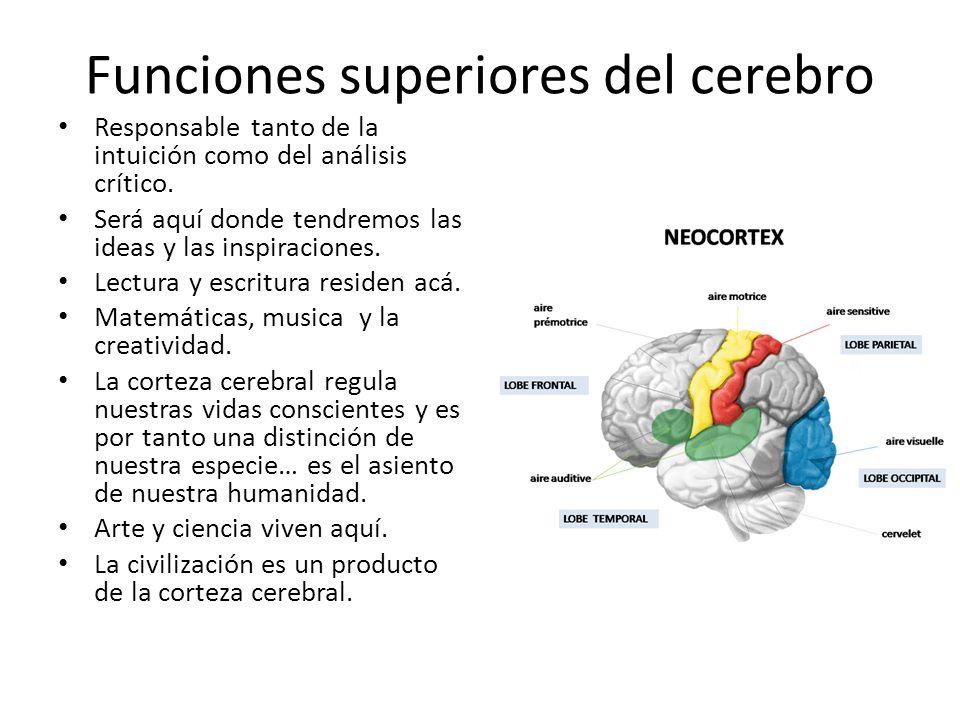 Funciones superiores del cerebro