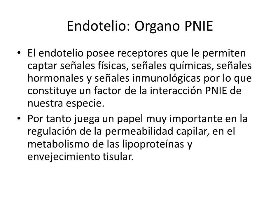Endotelio: Organo PNIE