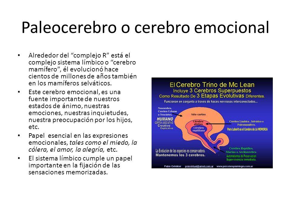 Paleocerebro o cerebro emocional