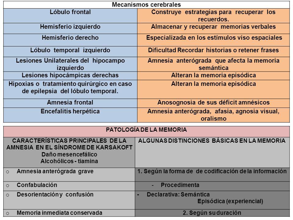 Mecanismos cerebrales Lóbulo frontal